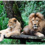 rental mobil bogor- taman safari indonesia